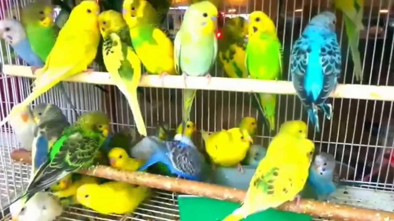 صور جميع انواع طيور الببغاء