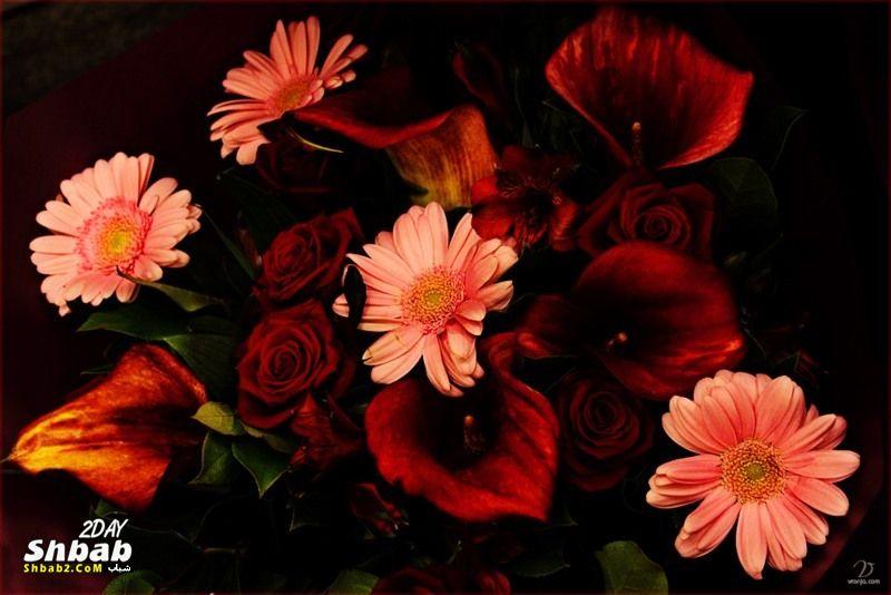 بالصور اجمل صور خلفيات لزهور الورد 20160712 497
