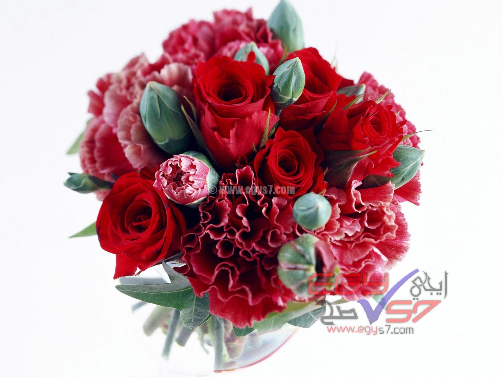 بالصور اجمل صور خلفيات لزهور الورد 20160712 498