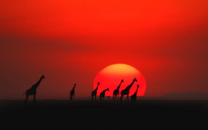 بالصور احسن غروب شمس في العالم 20160713 1860