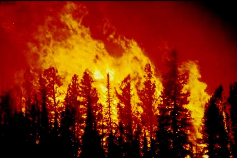 صوره كيف تحدث حرائق الغابات