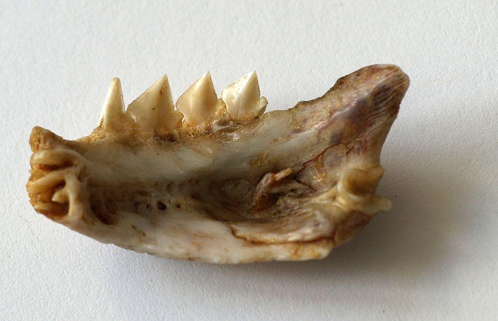 بالصور معلومات عامة عن سمك البيرانا 20160714 1144
