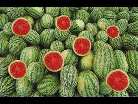 صوره تفسير رؤية البطيخ فى المنام