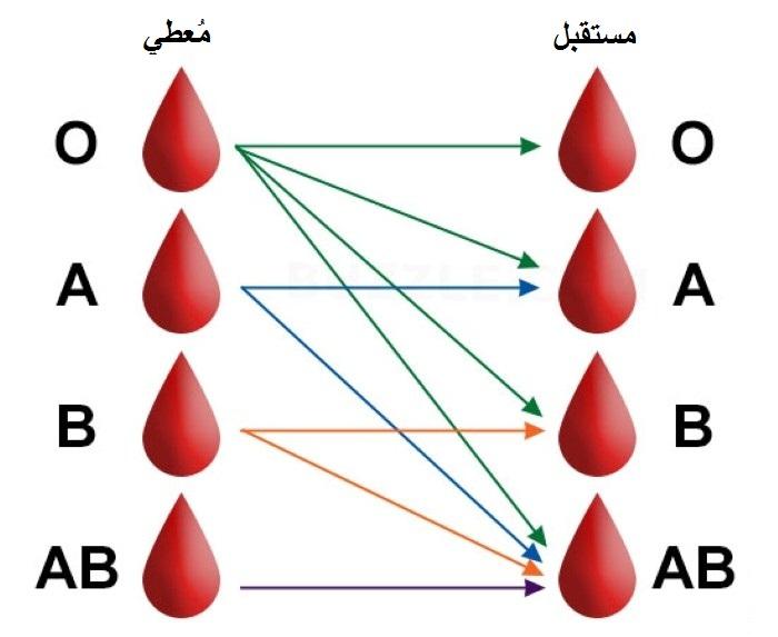 صوره ملف كامل عن فصيلة الدم