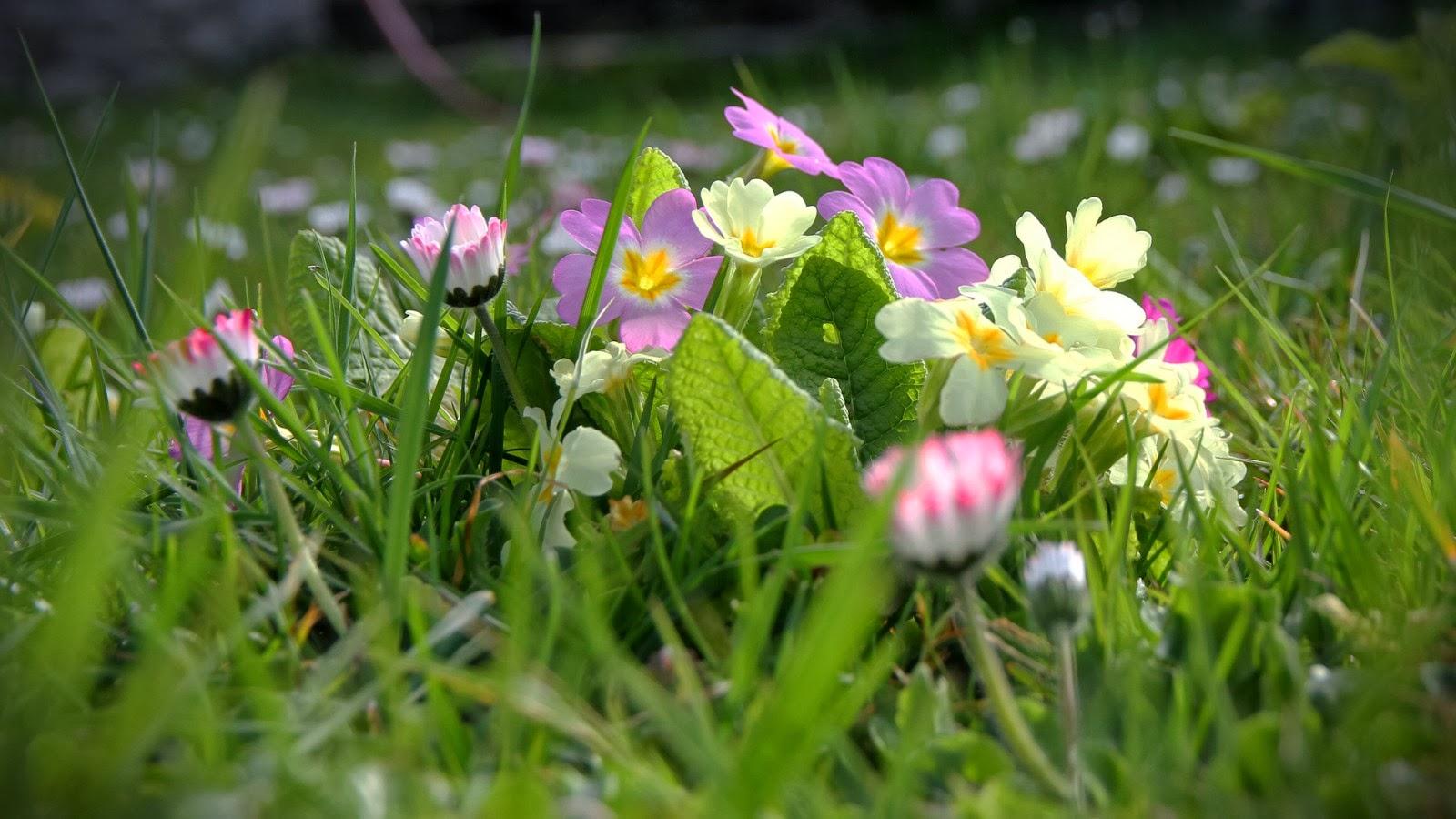 بالصور خلفيات الربيع بجودة عالية 20160714 418