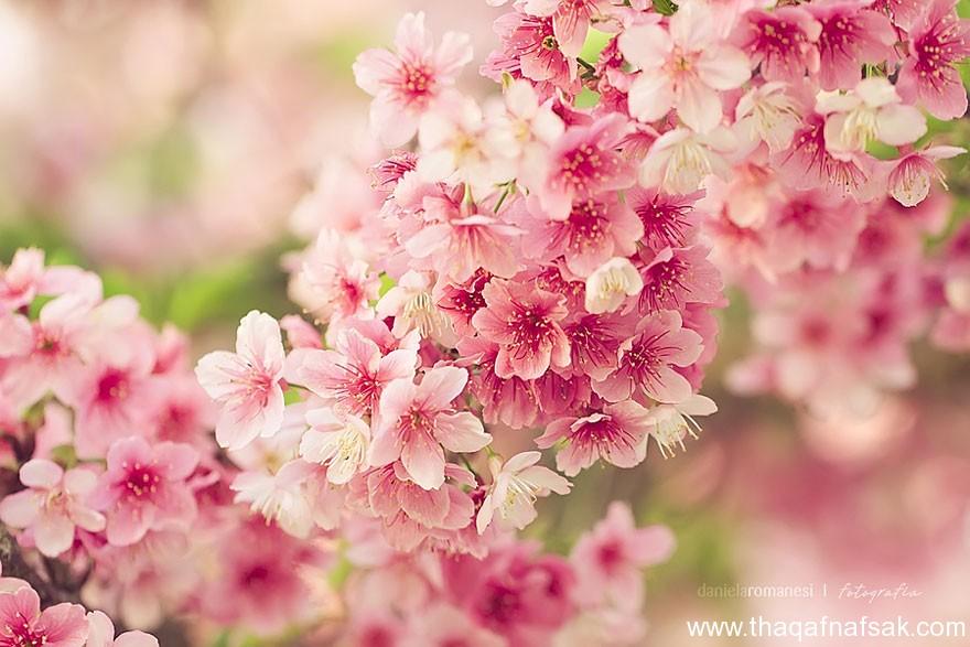 بالصور خلفيات الربيع بجودة عالية 20160714 420