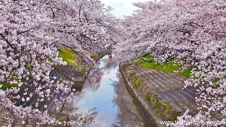 بالصور خلفيات الربيع بجودة عالية 20160714 424