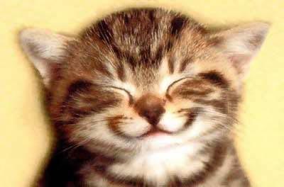 صور صورة قطط جميلة جدا