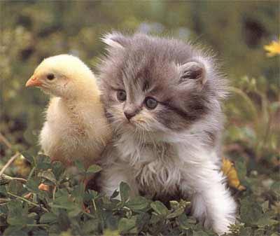 صور قطط و لا افضل بتجنن