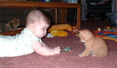 صور قطط و لا اروع بتجنن