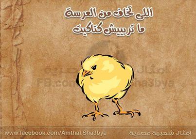 صوره امثال مصرية مضحكة جدا
