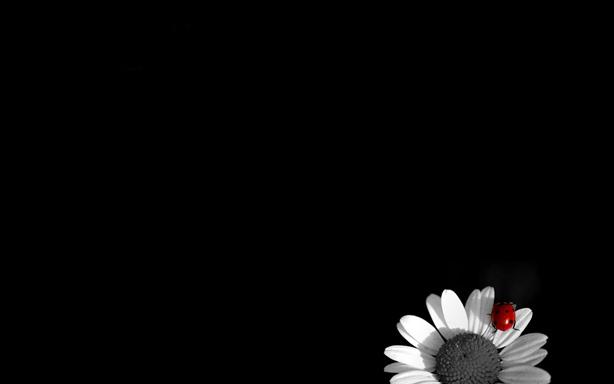 بالصور خلفية سوداء سادة كبيره للبروفايل للتصميم  احدث خلفيات سوداء مناظر طبيعية 20160716 1792
