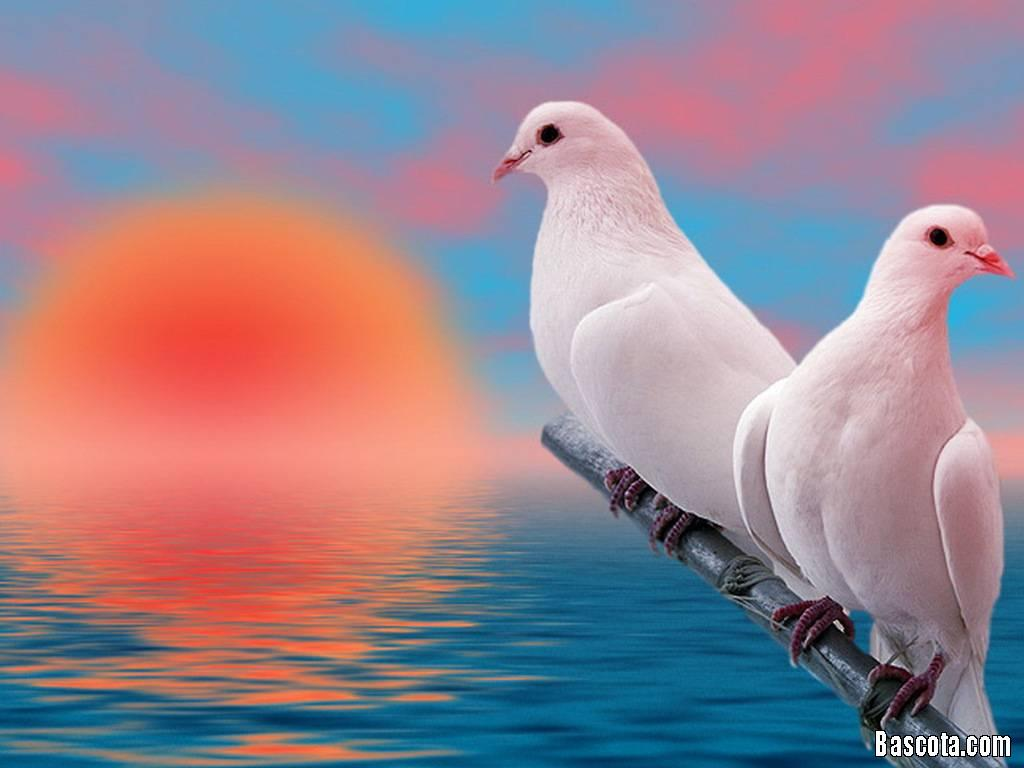 بالصور صور طيور بيضاء متحركة 20160716 1921