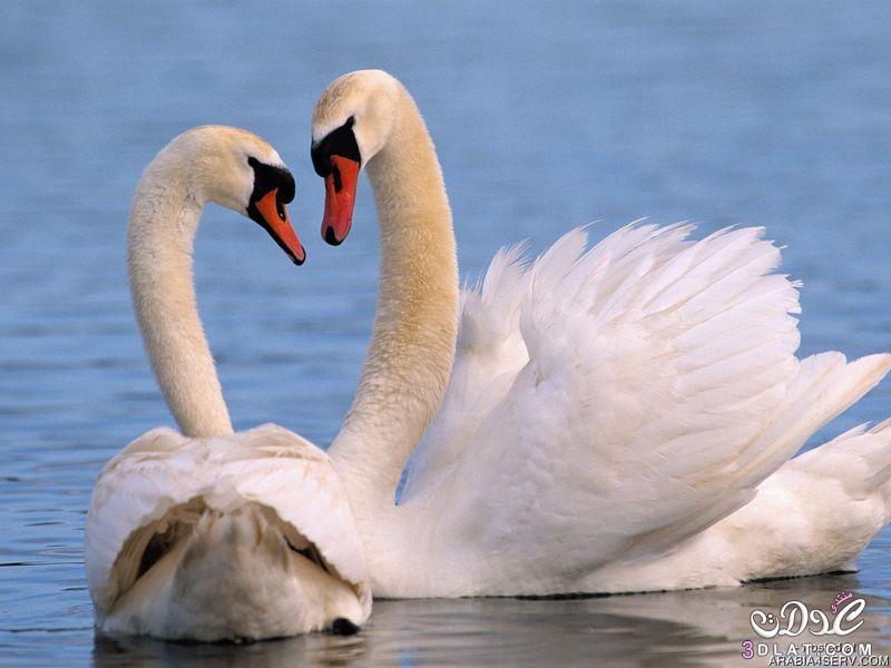 بالصور صور طيور بيضاء متحركة 20160716 1923