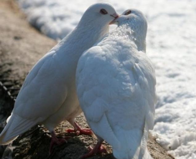 بالصور صور طيور بيضاء متحركة 20160716 1924