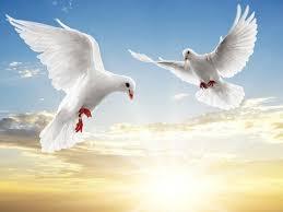 بالصور صور طيور بيضاء متحركة 20160716 1925