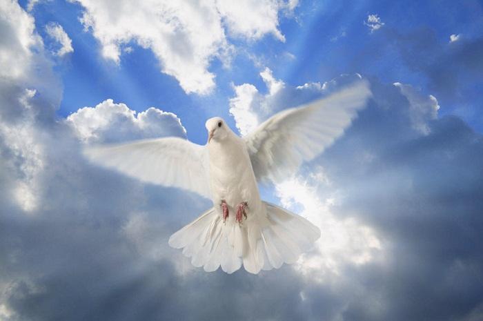 بالصور صور طيور بيضاء متحركة 20160716 1927