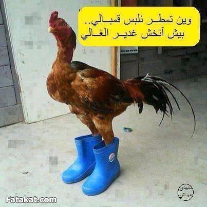 بالصور احلي صور نكت موريتانية جديدة 20160716 1950