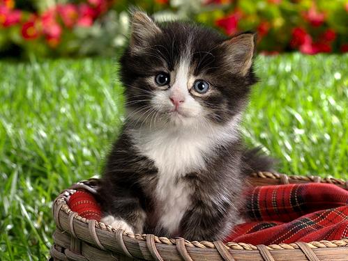 بالصور اجمل واحلى صور خلفيات قطط فى العالم 20160716 205