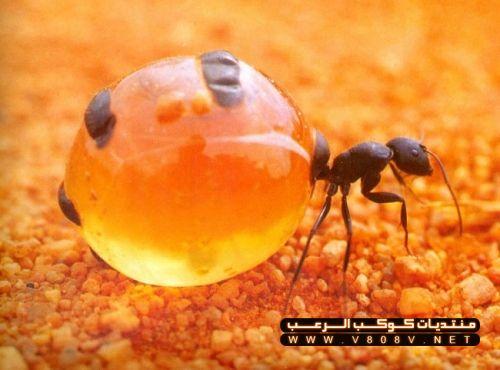بالصور غرائب وعجائب النمل العجيبة 20160716 2164