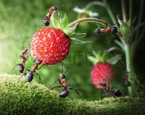 بالصور غرائب وعجائب النمل العجيبة 20160716 2165