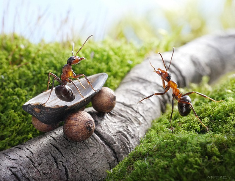 بالصور غرائب وعجائب النمل العجيبة 20160716 2186