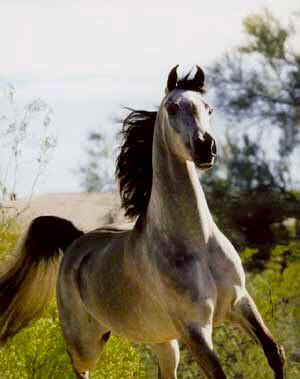 بالصور صور خيول اصيلة بالوان جميله 20160716 2322