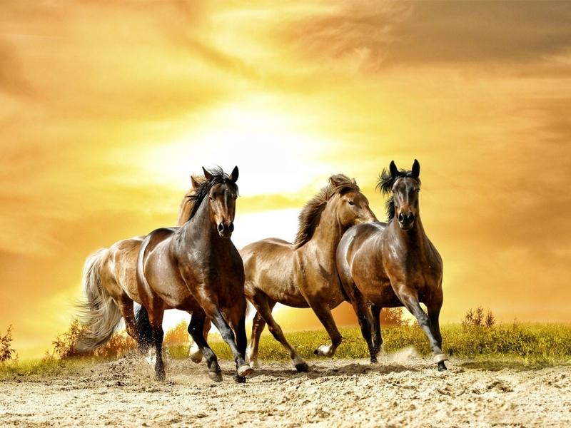 بالصور صور خيول اصيلة بالوان جميله 20160716 2323