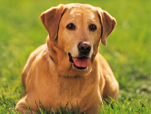 بالصور الكلب في المنام لابن سيرين 20160716 2419
