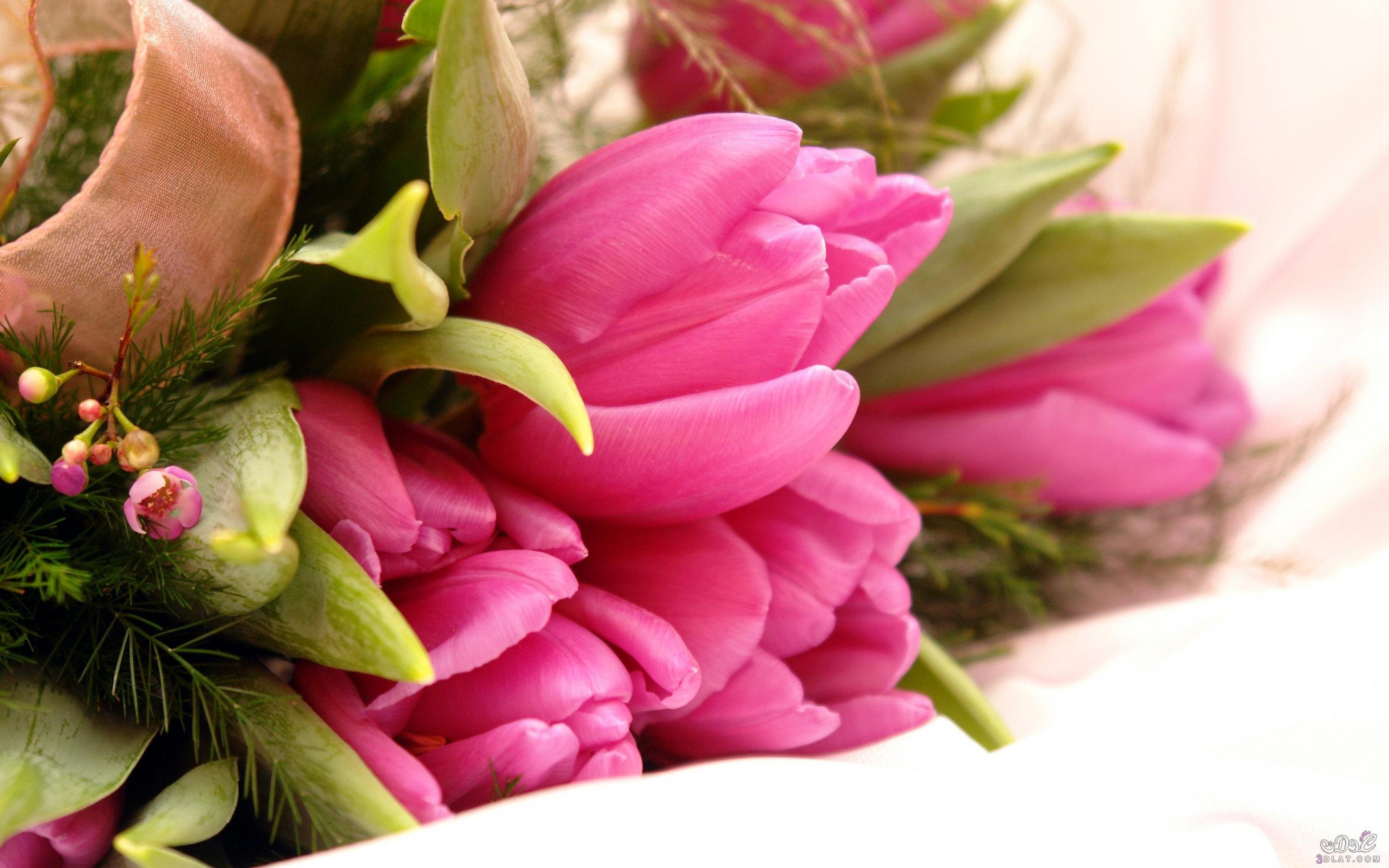 بالصور صور زهور جميلة وملونة 20160716 3223