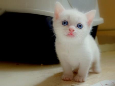 بالصور اجمل واحلى صور خلفيات قطط فى العالم 20160716 3262