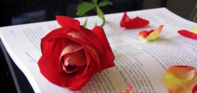 بالصور اجمل بيت شعر في الحب اجمل ابيات شعر رومانسية 2019 20160717 359