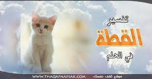 بالصور تفسير حلم القطط الميته بالمنام 20160717 695