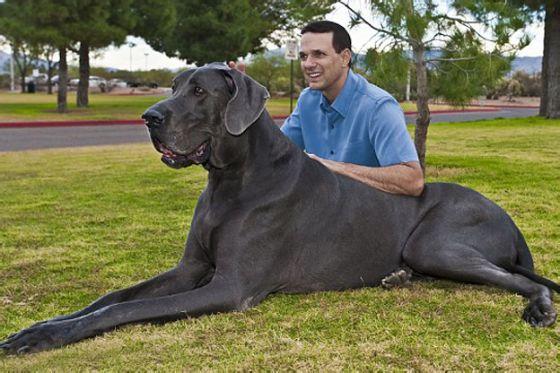 بالصور اكبر كلاب في العالم 20160719 1038