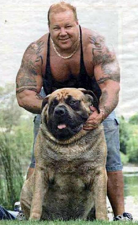 بالصور اكبر كلاب في العالم 20160719 1042