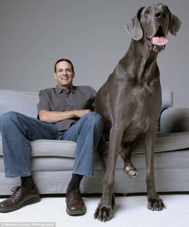 بالصور اكبر كلاب في العالم 20160719 1045