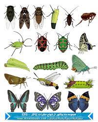 بالصور حشرات صغيرة في الحمام 20160719 1353