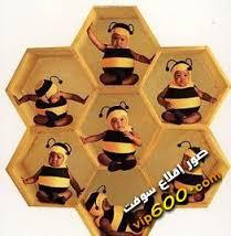 بالصور قصص اطفال انتقام النحلة عسولة 20160719 1849