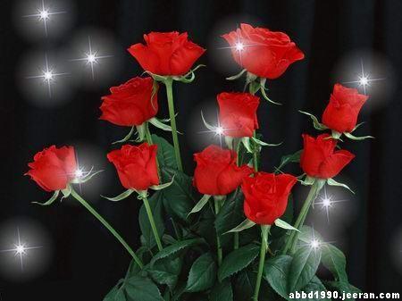 بالصور صور الورد الجوري وباقات الورد غاية فى الروعة 20160720 1051