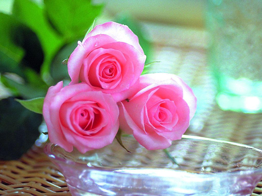 بالصور صور الورد الجوري وباقات الورد غاية فى الروعة 20160720 1056