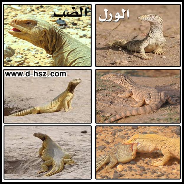 بالصور ما هو حيوان الوارا 20160720 1353