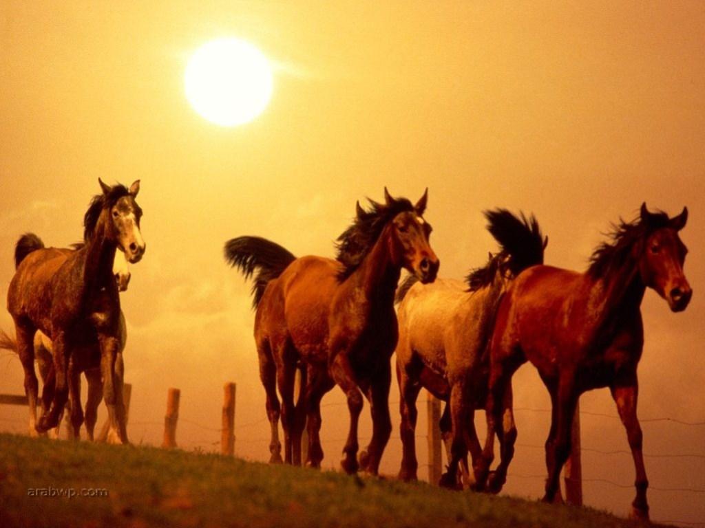 بالصور تفسير حلم الحصان البني للمتزوجه لابن سيرين 20160720 499