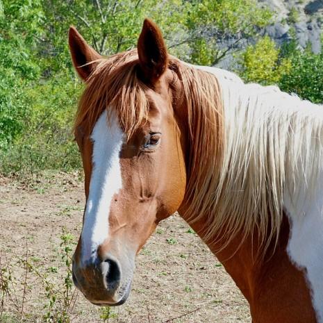 بالصور تفسير حلم الحصان البني للمتزوجه لابن سيرين 20160720 500
