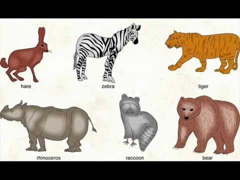 بالصور اسماء ابناء الحيوانات جميل ان نعلم ونتعلم 20160720 512
