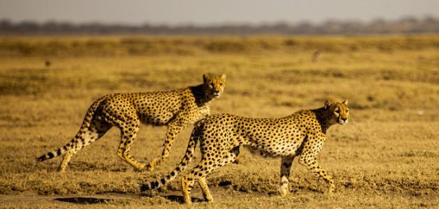 بالصور اسماء الحيوانات بالعربي اسماء ذكور الحيوانات في اللغة كنوز 20160720 516