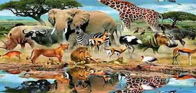 بالصور اسماء الحيوانات بالعربي اسماء ذكور الحيوانات في اللغة كنوز 20160720 517