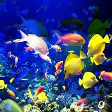 صورة معلومات عن عالم البحار المخيف , كل ما تريد معرفته عن عالم البحار المخيف😮