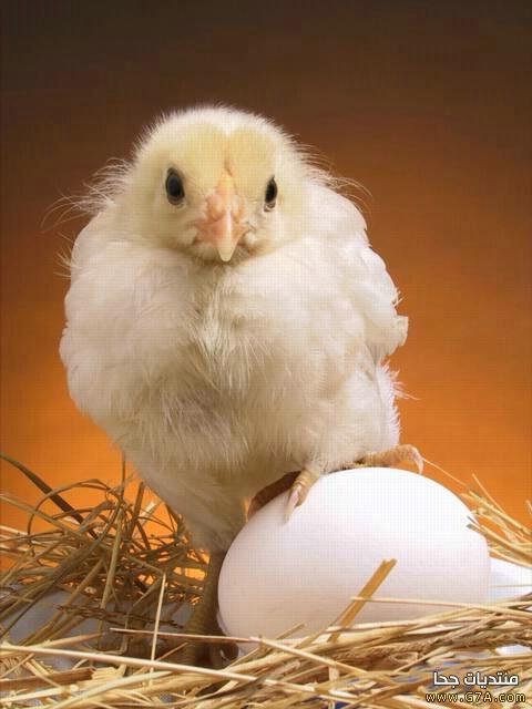 بالصور صور حيوانات وطيور روعه روعة 20160723 280