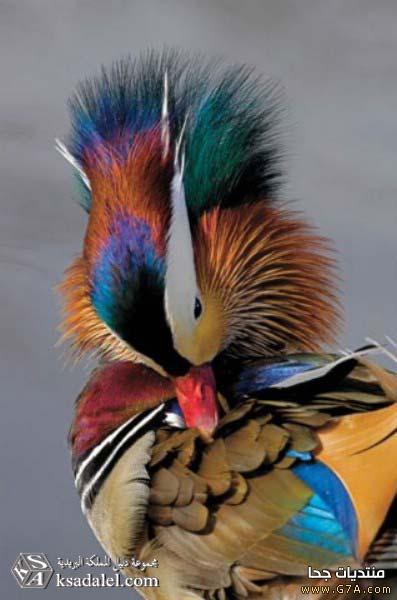 صور طيور روعه ، صور احلى الطيور بالعالم 2020 ، صور طيور كيوت صغار Cute Birds 2020