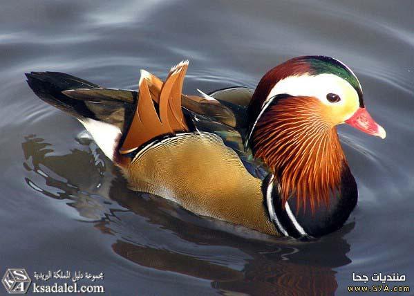 صور طيور حلوه ،<br /><br /> <br /><br />صور اجمل الطيور في العالم 2019 ،<br /><br /> <br /><br />صور طيور كيوت صغيره Cute Birds 2019